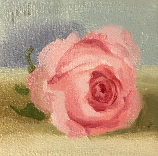 Blush Rose
