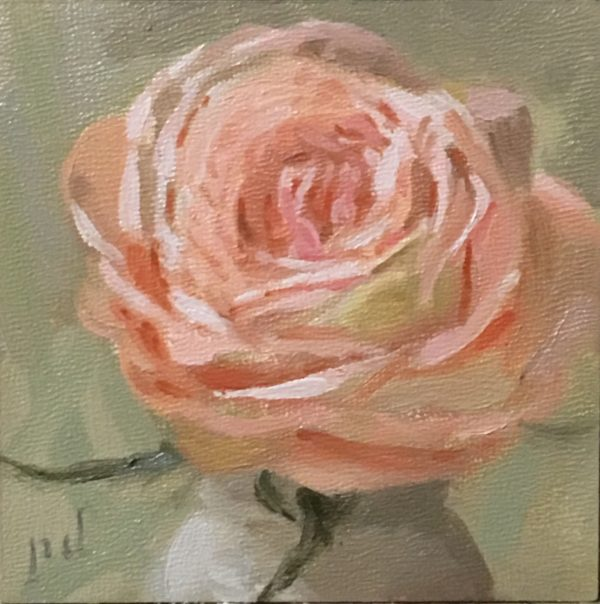 Coral Pink Rose