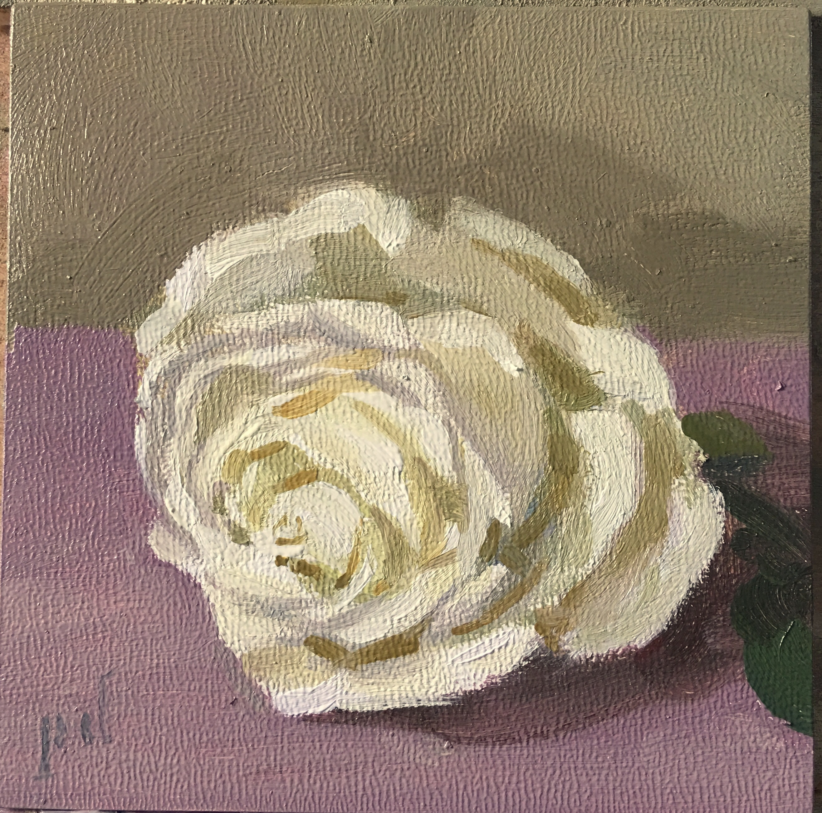 White Rose on Purple