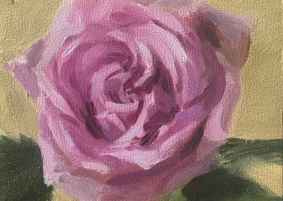 Deep Lilac Rose