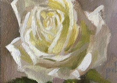Limelight Rose