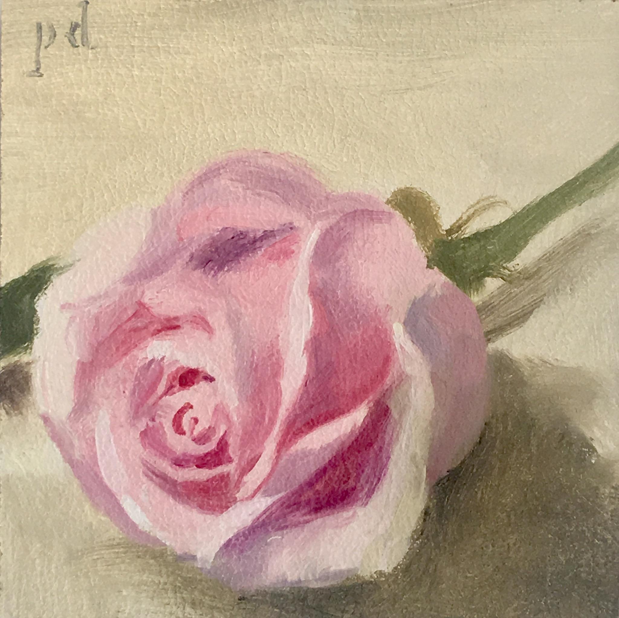 Pink Seashell Rose
