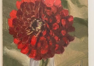 Red Pomegranate Zinnia